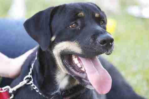 Students shed light on pet adoption